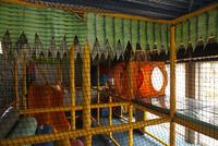 Kinderdoolhof